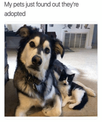 Fresh, Memes, and Animal: My pets just found out they're  adopted 42 Fresh Animal Memes Dump of the Day