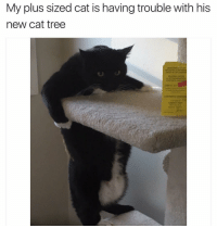 Funny, Plus Size, and New Cat: My plus sized cat is having trouble with his  new cat tree 😂😂😂 | More 👉 @miinute