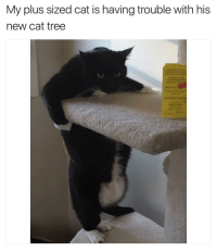 Funny, Tree, and Trees: My plus sized cat is having trouble with his  new cat tree Me too | For more 👉 @miinute