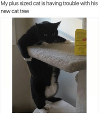 Grumpy Cat, Tree, and Plus Size: My plus sized cat is having trouble with his  new cat tree
