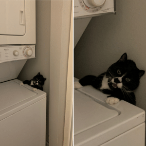 My poor cat got stuck in the laundry room: My poor cat got stuck in the laundry room