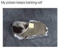 Dank, Wtf, and Potato: My potato keeps barking wtf