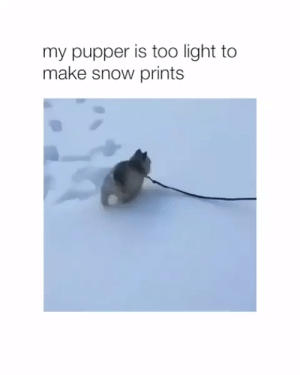 Animals, Cute, and Dogs: my pupper is too light to  make snow prints Cute 🥰 #dogs #doglovers #puppy #puppies #animals #animallovers #lovelyanimalsworld #dogvideos