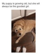 Bless Up, Blessed, and Girls: My puppy is growing old, but she will  always be the goodest girl. I have a soft spot in my heart for old boys and girls, they are truly blessed creatures 😢 bless up! ❤️ (🎥: Reddit u-unrealethan