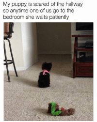 Follow me @antisocialtv @lola_the_ladypug @x__social_butterfly__x @x__antisocial_butterfly__x: My puppy is scared of the hallway  so anytime one of us go to the  bedroom she waits patiently Follow me @antisocialtv @lola_the_ladypug @x__social_butterfly__x @x__antisocial_butterfly__x