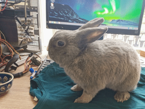 My rabbit inspecting some old hardware: My rabbit inspecting some old hardware