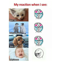 Cats, Dogs, and Memes: My reaction when i see:  Baby cats  Babyipenguins  Baby dogs  Babyhuman