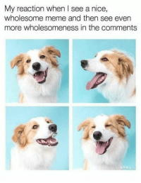 Meme, Wholesome, and Nice: My reaction when l see a nice,  wholesome meme and then see even  more wholesomeness in the comments