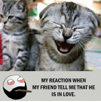 Twitter: BLB247 Snapchat : BELIKEBRO.COM belikebro sarcasm meme Follow @be.like.bro: MY REACTION WHEN  MY FRIEND TELL ME THAT HE  IS IN LOVE. Twitter: BLB247 Snapchat : BELIKEBRO.COM belikebro sarcasm meme Follow @be.like.bro