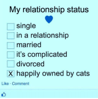 Where's the in a relationship and we are both happily owned by cats? Via CAT Planet: My relationship status  single  in a relationship  married  it's complicated  divorced  X happily owned by cats  Like Comment Where's the in a relationship and we are both happily owned by cats? Via CAT Planet