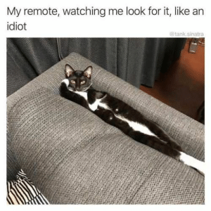 Memes, Today, and Idiot: My remote, watching me look for it, like an  idiot  IO  tank.sinatra 32 Of Today's Freshest Pics And Memes
