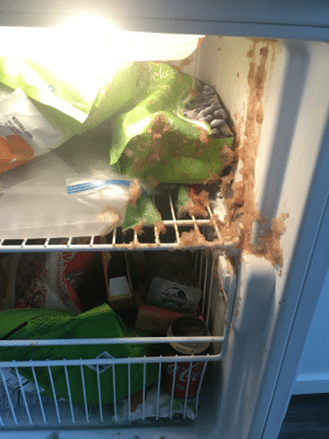 My Roomate forgot his can of Coke in the freezer and the lid exploded overnight.: My Roomate forgot his can of Coke in the freezer and the lid exploded overnight.