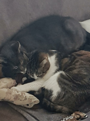 Cats, Comfortable, and Roommates: My roommates cats are finally getting comfortable with each other!