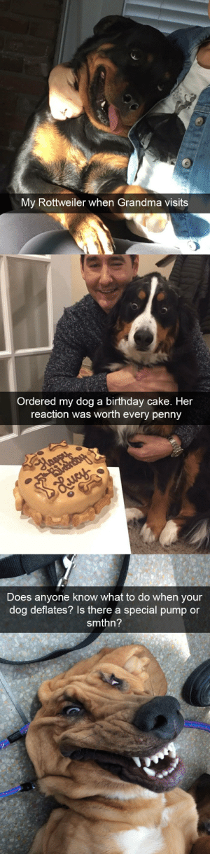 Birthday, Grandma, and Target: My Rottweiler when Grandma visits   Ordered my dog a birthday cake. Her  reaction was worth every penny   Does anyone know what to do when y  our  dog deflates? Is there a special pump or  smthn? Dog snapsvia @animalsnaps