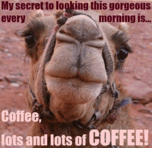 Meme, Coffee, and Gorgeous: My secret to looking this gorgeous  every  morning is..  Coffee,  lots and lots of COFFEE! Humorous Wednesday Coffee Meme   morning   Wednesday coffee, Coffee ...