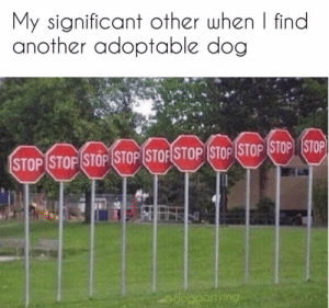 Instagram, Target, and Blank: My significant other when | find  another adoptable dog  STOP (STOPİSTOP (STOP (STOFSTOP (STOP (STOP (STOP STOP  @dogpartying I. Have. To. Adopt. Them. All.Via @dogpartying