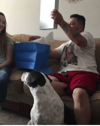 "Dad, Forever, and Girl Memes: ""My sister & I surprised my step dad with adoption papers. Forever grateful for you being our father figure ❤"" 😭😭 https://t.co/v4WWM0uluW"