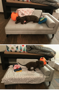 Puppy, Her, and Sofa: My sister bought her new puppy her own little sofa