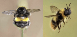 My sister keeps photoshopping her cat's face onto bees: My sister keeps photoshopping her cat's face onto bees