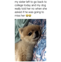 College, Memes, and Today: my sister left to go back to  college today and my dog  really told her no when she  asked if he was going to  miss her I can't believe he said that 😂 Credit: @martineianniello
