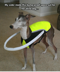"Meme, Tumblr, and Http: My sister made this bump-proof space suit for  her blind dog.. <p>Helping A Blind Dog.<br/><a href=""http://daily-meme.tumblr.com""><span style=""color: #0000cd;""><a href=""http://daily-meme.tumblr.com/"">http://daily-meme.tumblr.com/</a></span></a></p>"
