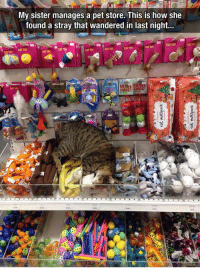 Heaven, How, and Cat: My sister manages a pet store. This is how she  found a stray that wandered in last night...  CAT TO  CATT  CAT TOY  CAT TOY  CAT TOY  CAT TOY  CAT TOY  CAT TO  CAT TOY  CAT TOY  MERHT <p>This Kitty Just Found Cat Heaven.</p>