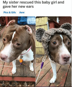 AWW 😭 😭: My sister rescued this baby girl and  gave her new ears  Pics & Gifs Aww AWW 😭 😭