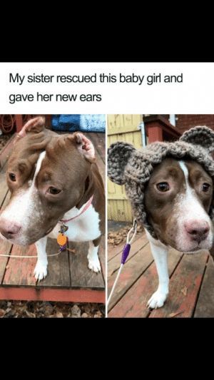 Animals, Dogs, and Memes: My sister rescued this baby girl and  gave her new ears 27 Dog Memes That Will Brighten Up Your Day - Lovely Animals World #dogs  #dogmemes #memes #lovelyanimalsworld