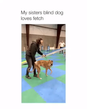 Dog, Sisters, and Fetch: My sisters blind dog  loves fetch