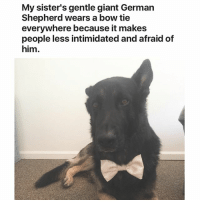 i love reddit except subreddits are so rigid and controlled by dictators who ban you for disagreeing with anything LOL!!! Has: My sister's gentle giant German  Shepherd wears a bow tie  everywhere because it makes  people less intimidated and afraid of  him. i love reddit except subreddits are so rigid and controlled by dictators who ban you for disagreeing with anything LOL!!! Has