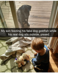 Fake, Goldfish, and Memes: My son feeding his fake dog goldfish while  his real dog sits outside, pissed Dog snaps 😍