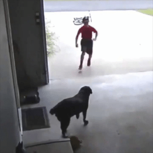 "Neighbors, Dog, and Pet: ""My son snuck into the neighbors yard to pet their dog"""