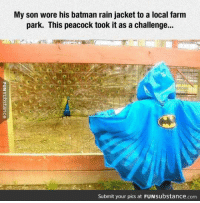 Batman, Memes, and Peacock: My son wore his batman rain jacket to a local farm  park. This peacock took it as a challenge...  Submit your pics at FUN substance com