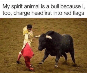 Meirl: My spirit animal is a bull because I,  too, charge headfirst into red flags Meirl
