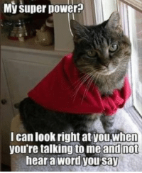 17 Funny Cat and Ani 17 Funny Cat and Animal Pictures #funnycats #funnydogs #funnyanimals #animalpics #animals: My super power?  I can look right at youwhen  you're talking to meand not  hear a word you say 17 Funny Cat and Ani 17 Funny Cat and Animal Pictures #funnycats #funnydogs #funnyanimals #animalpics #animals
