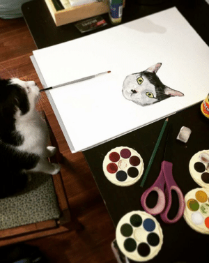 My talented cat doing a self portrait 😸: My talented cat doing a self portrait 😸