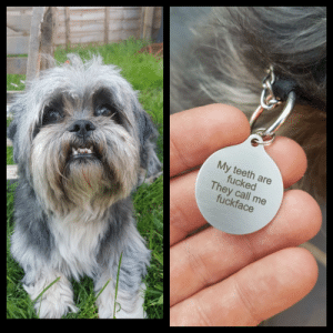Dad, Girlfriend, and Thought: My teeth are  fucked  They call me  fuckface Girlfriends dad thought he would treat his daughters dog to a new name tag.