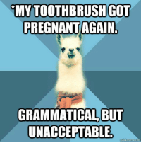 "Meme, Pregnant, and Blue: MY TOOTHBRUSHGOT  PREGNANT AGAIN  GRAMMATICAL, BUI  UNACCEPTABLE <p><span>[Picture: Background: 8-piece pie-style color split with alternating shades of blue. Foreground: Linguist Llama meme, a white llama facing forward, wearing a red scarf. Top text: "" *My toothbrush got pregnant again. "" Bottom text: "" Grammatical, but unacceptable. ""]</span></p>"