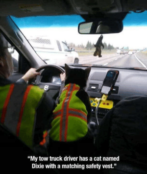 "Memes, 🤖, and Cat: ""My tow truck driver has a cat named  Dixie with a matching safety vest."""