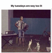 Lit, Memes, and 🤖: My tuesdays are way too lit Anticipating a doozy this week 🐱🐱🐱