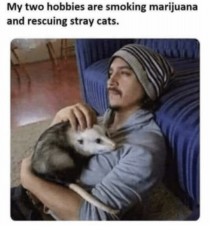 Cats, Funny, and Smoking: My two hobbies are smoking marijuana  and rescuing stray cats. All out via /r/funny https://ift.tt/2D74h0F