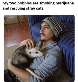 No cat left behind by SchitzPopinov719 MORE MEMES: My two hobbies are smoking marijuana  and rescuing stray cats. No cat left behind by SchitzPopinov719 MORE MEMES