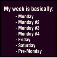 Monday Memes: My week is basically:  Monday  Monday #2  Monday #3  Monday #4  Friday  Saturday  Pre-Monday
