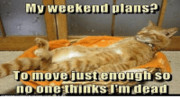 Animals, Memes, and The Weekend: My weekend plans  To move justenough so These Animals Have Some Great Plans For The Weekend (Memes)