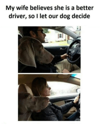Memes, Wife, and 🤖: My wife believes she is a better  driver, so I let our dog decide Let the dog be the judge 😂