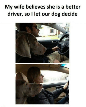 Believes: My wife believes she is a better  driver, so I let our dog decide