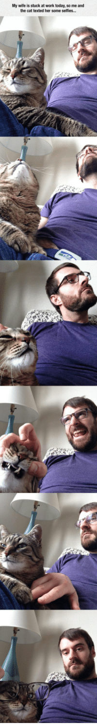 <p>Selfie Time With The Cat.</p>: My wife is stuck at work today, so me and  the cat texted her some selfies... <p>Selfie Time With The Cat.</p>