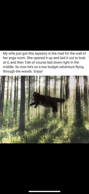 Budget, Mail, and The Middle: My wife just got this tapestry in the mail for the wall of  her yoga room. She opened it up and laid it out to look  at it, and then Toki of course laid down right in the  middle. So now he's on a low budget adventure flying  through the woods. Enjoy! So majestic