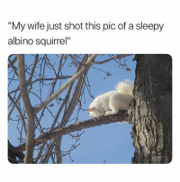 "Beautiful, Funny, and Squirrel: ""My wife just shot this pic of a sleepy  albino squirrel"" It's so beautiful (Credits Unknown)"