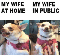 My Wife Meme: MY WIFE  MY WIFE  AT HOME IN PUBLIC